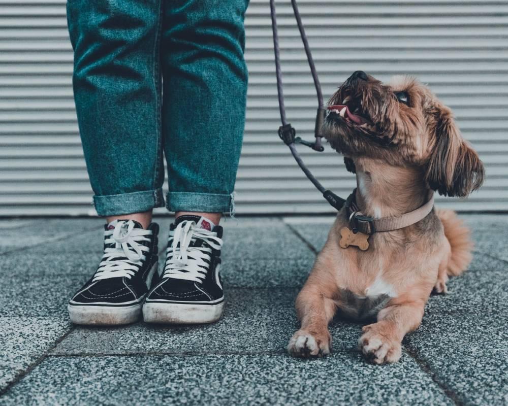 ako vybrať kĺbovú výživu pre psov